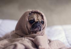 Consultorio WUF: ¿cómo puedo saber si mi perro tiene fiebre?