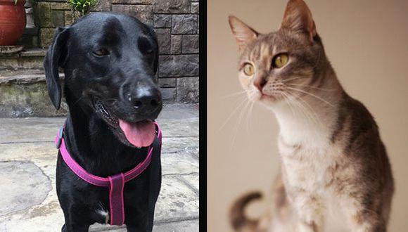 Contrario a lo que se pensó al inicio de la cuarentena decretada para proteger al país del COVID-19, el número de adopciones de perros y gatos superó las expectativas. (Fotos : Cortesía WUF y Misicha)