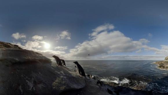 El pingüino de la Antártida es particularmente vulnerable al cambio climático porque la pérdida de hielo marino afecta a su hábitat. (Foto: BirdLife International)