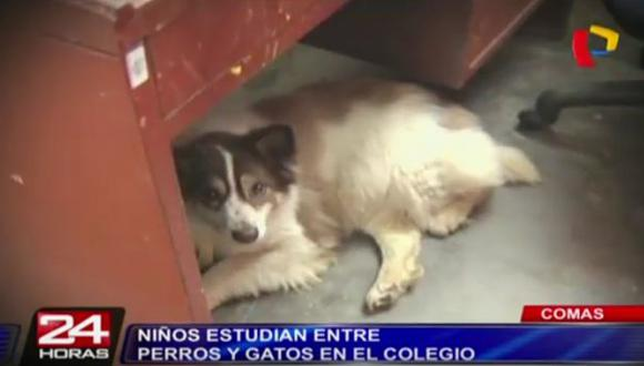 Comas: escolares estudian entre perros y gatos [VIDEO]