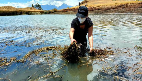 En la limpieza participaron los integrantes de la Asociación de Guías de Montañas del Perú. (Foto: Dircetur Áncash)