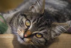 La adorable e inesperada forma en que un gato juega con su dueña