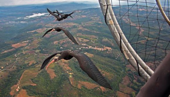 ¿Por qué las aves vuelan en V?