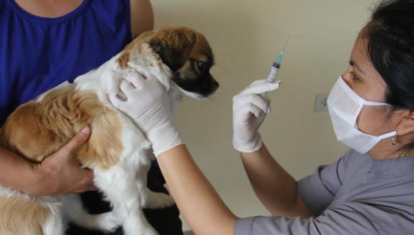 La Municipalidad de Lima precisó que los canes que sean llevados a vacunarse no deben presentar fiebre ni tener menos de tres meses de vida. Además que las hembras no deben estar preñadas. (Foto: MML)