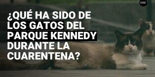 Voluntarios siguen alimentando a gatos del parque Kennedy en cuarentena