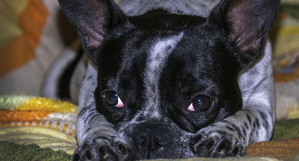 El perro se ha convertido en protagonista de una singular escena que fue difundida en YouTube. (Pixabay)