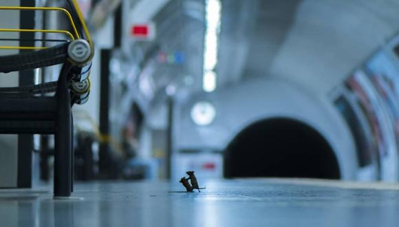 'Pelea en la estación', la imagen que ha ganado los premios Wildlife Photographer.