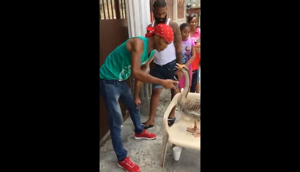 A Facebook llegó el video de un hombre que da órdenes a un ganso en un show callejero. Ocurrió en República Dominicana y se hizo viral en redes sociales. (Foto: Captura)