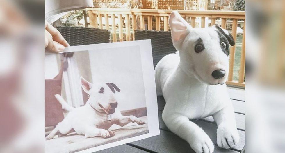 Gustavo el Bull Terrier (Foto: Instagram)