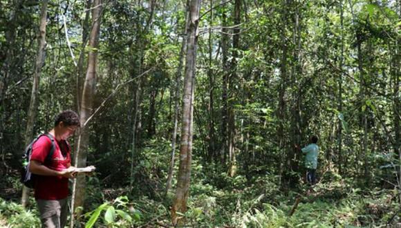 Bioparque Amazónico: Bosque de Huayo fortalecerá conservación de bosques de varillal (Andina)