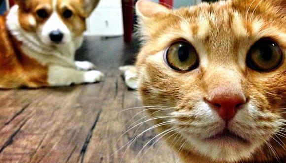 Si los dueños de la mascota están hospitalizados con covid-19, esta será puesta en cuarentena en una instalación administrada por la ciudad. (Foto: Getty Images)