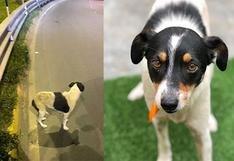 ¿Cómo rescatar a un perro sin ser mordido o atropellado en el intento?