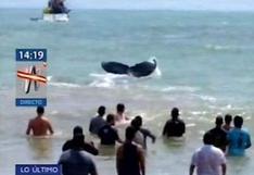 Tumbes: voluntarios rescatan a ballena jorobada y esta retornó al mar   VIDEO