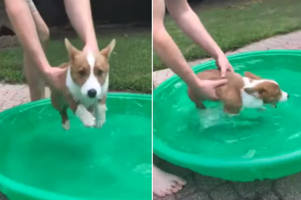 El perro nunca mostró signos de temor al agua. (YouTube: ViralHog)
