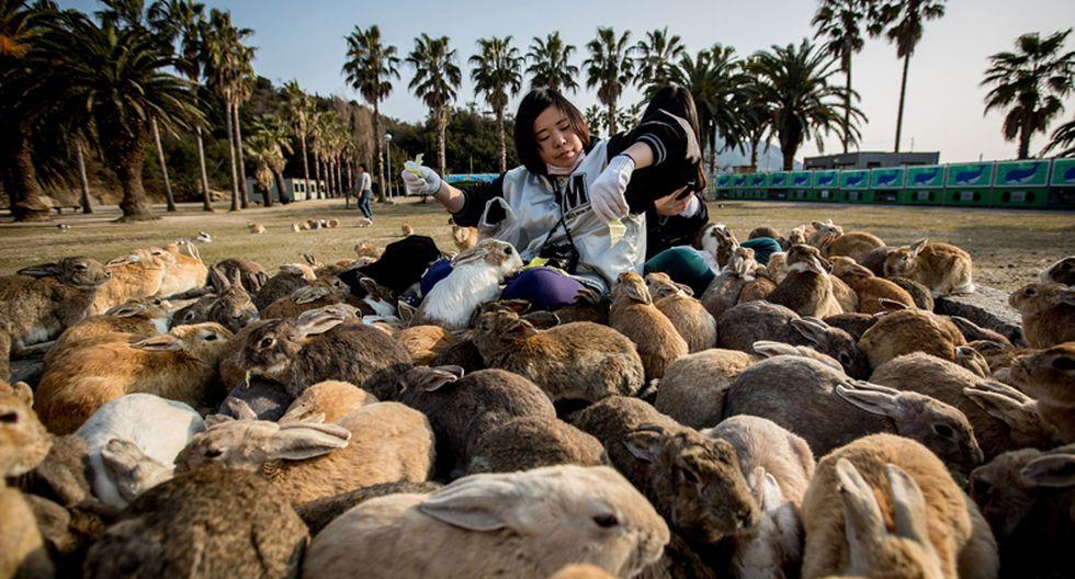 Okunoshima: Una isla en Japón llena de conejos silvestres - 1