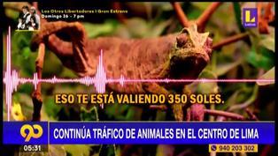 Continúa el tráfico de especies protegidas en pleno Centro de Lima