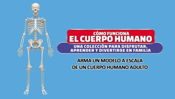 Descubre el cuerpo humano armándolo pieza a pieza desde este martes 5 de setiembre.