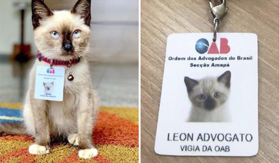 Se quejaban por un gatito callejero que se refugió en un estudio de abogados de Brasil, así que decidieron contratarlo. La historia es viral en Facebook. (dr_leon_advogato)