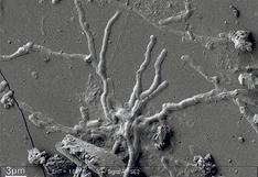 """El """"asombroso"""" descubrimiento de neuronas casi intactas en un cerebro en las ruinas de Pompeya y Herculano"""