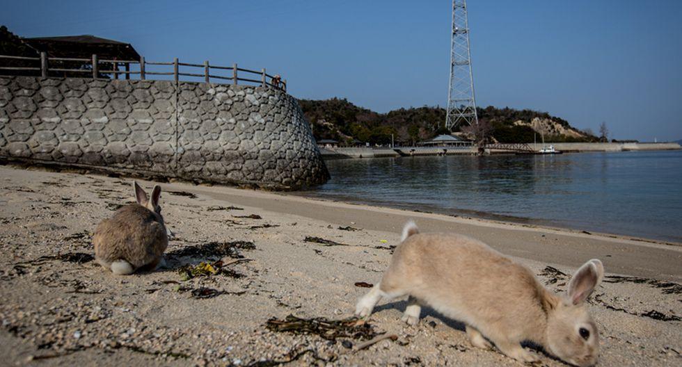 Okunoshima: Una isla en Japón llena de conejos silvestres - 4