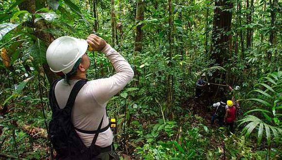 A la fecha, la data actualizada muestra la existencia de 804 concesiones forestales.