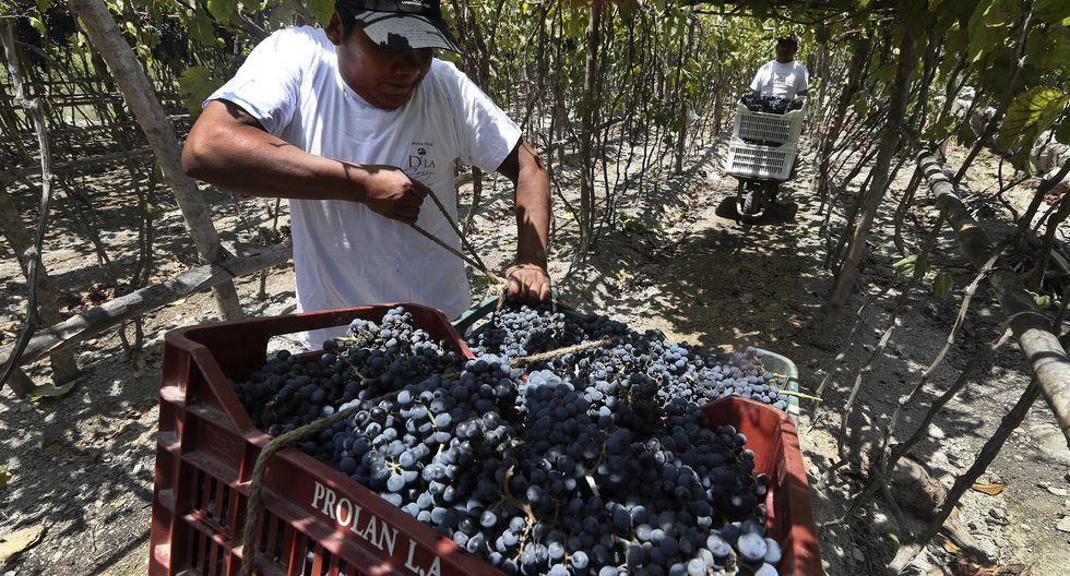 Cañete celebra el 463 aniversario de su fundación. En esta crónica por la provincia al sur de Lima conozca más sobre la importancia del pisco y el vino como pilares de su identidad. (Rolly Reyna / El Comercio)