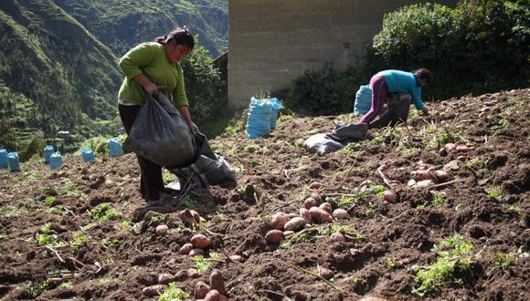 Midagri contempla potenciar las Direcciones y Agencias Agrarias con el financiamiento de 550 proyectos de extensión agraria. (Foto: GEC)
