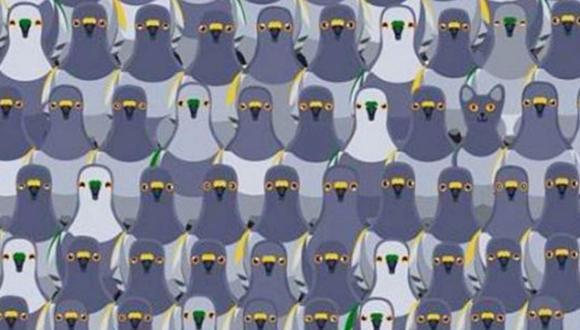 Nuevo reto viral de Facebook: mira la imagen y descubre al gato escondido en la foto entre decenas de palomas.