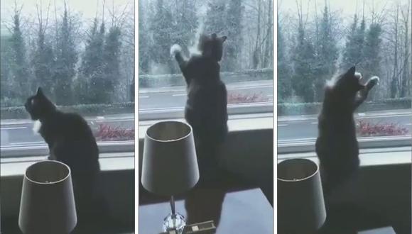 El gato, de nombre Sox, no se percató que la ventana estaba cerrada. (Foto: Caters Clips | YouTube)