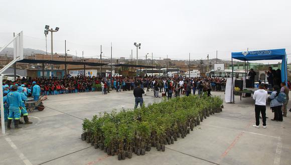 Voluntarios sembraron más de 2.400 árboles en Ventanilla (Foto: Fundación Telefónica).