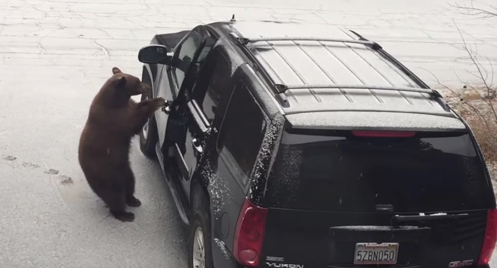 Un osado oso ingresó a un vehículo y se pone al volante. (Foto: Captura YouTube)