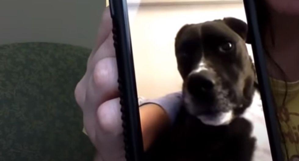 El perro, de momento, solo puede ver a su dueña a través de una pantalla. (YouTube: ViralHog)