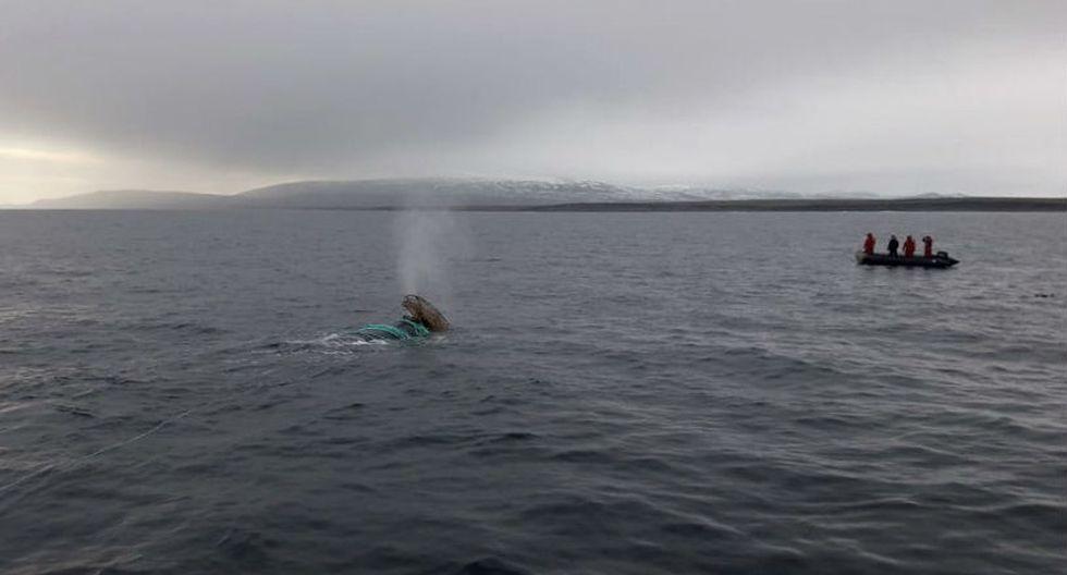 Los cetáceos al quedar atrapados en las redes pueden tener serios daños.   Foto: EFE