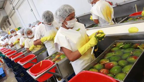 Perú se ha posicionado como el cuarto mayor proveedor de mango fresco en el mundo. (Foto: GEC)