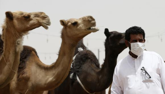 Arabia Saudí advierte del riesgo de virus MERS de los camellos