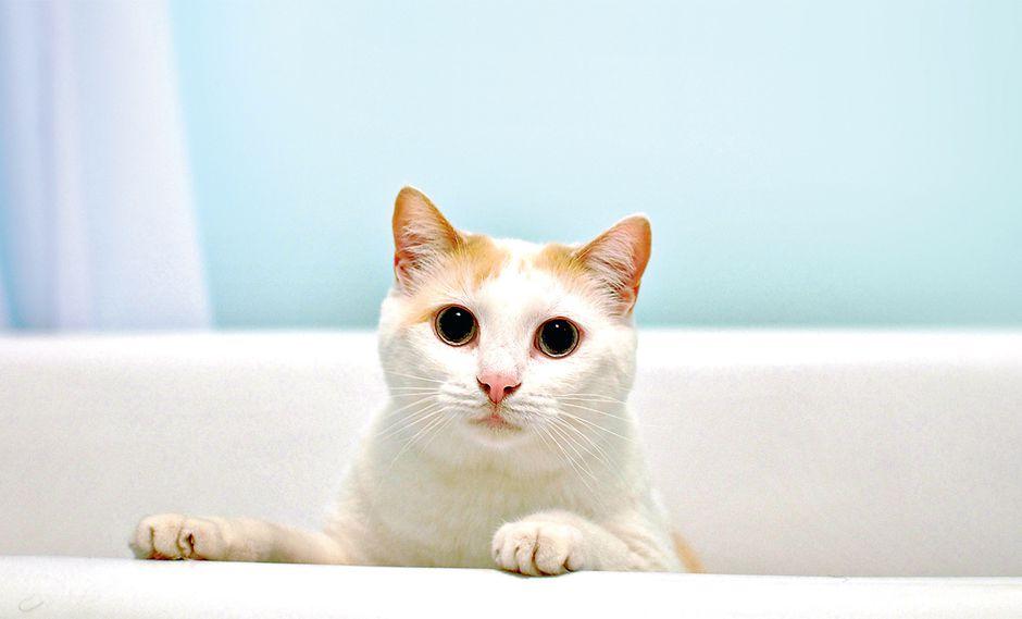 Limpieza felina: acostumbra a tu gato a bañarse desde pequeño