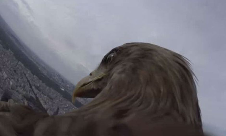 ¿Cómo ven el mundo las águilas? [VIDEO]