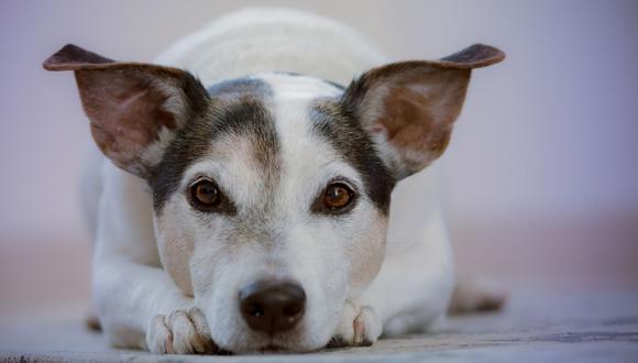 El video del perro fue compartido en Facebook por 9GAG. (Foto: Referencial - Pixabay)