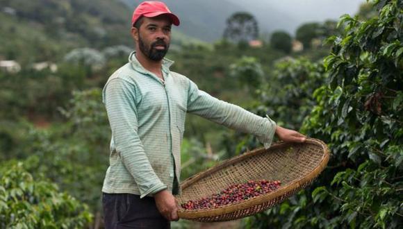 El café, el maíz y el frijol son los cultivos más afectados por el cambio climático en Centroamérica. Foto: GETTY IMAGES, vía BBC Mundo