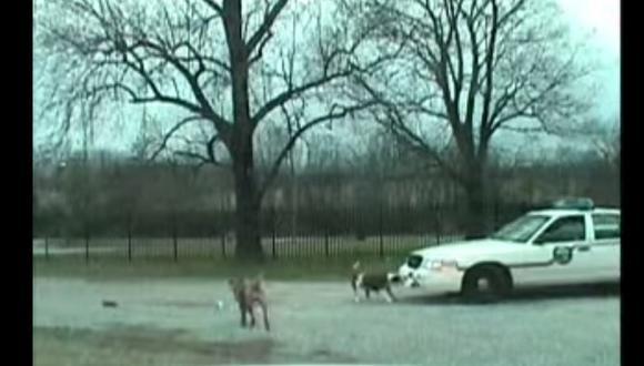 Insólito: Un perro destroza el parachoques de un patrullero