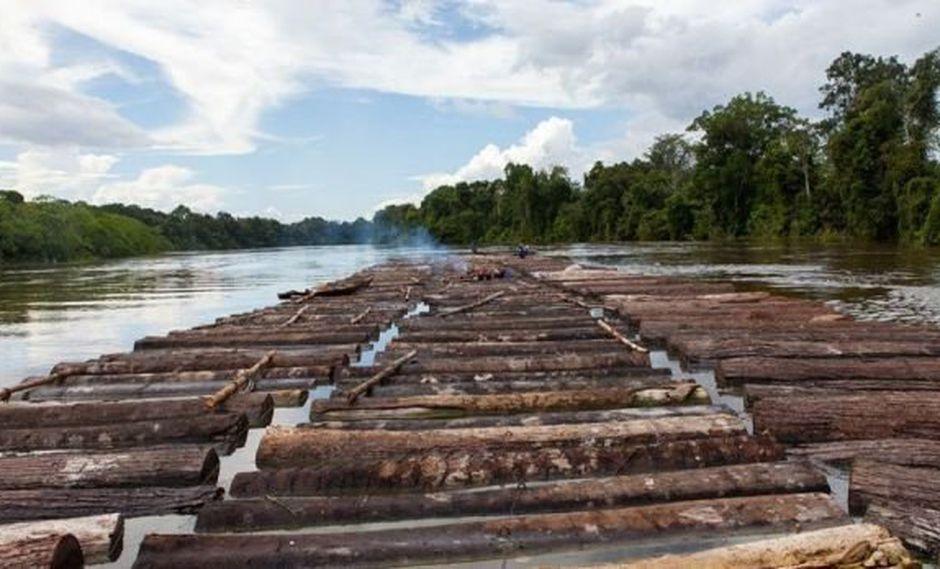 Persiste amenaza de tala ilegal contra Reserva Pacaya Samiria - 1