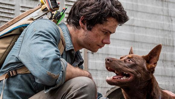 """Boy es un perro callejero que aparece en """"Amor y monstruos"""" cuando salva a Joel. (Foto: Netflix)"""