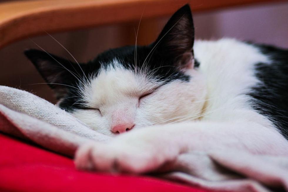 El gato tuvo un comportamiento inesperado a la hora de dormir. (Pixabay)