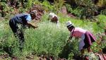 Quienes viven en las zonas rurales del país y no fueron incluidos en el Bono Rural pueden inscribirse al Bono Familiar Universal (Foto: Andina)