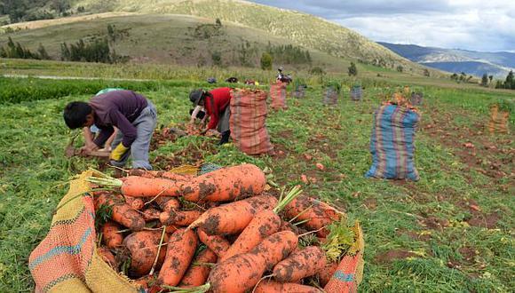 """""""De acuerdo con el Banco Mundial, los avances de la agricultura en los últimos años han sido decisivos para la reducción de la pobreza extrema en el último tiempo"""". (Foto: Archivo)."""