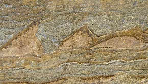 El fósil más antiguo tiene 3.700 millones de años