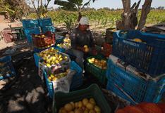 Reforma digital en el agro aumentaría en 45% la productividad del sector