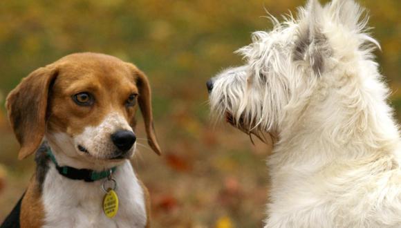 Muchos perros rehúyen el contacto con otros perros o reaccionan con agresividad cuando se encuentran con alguno. (Hilary Halliwell Pexels)