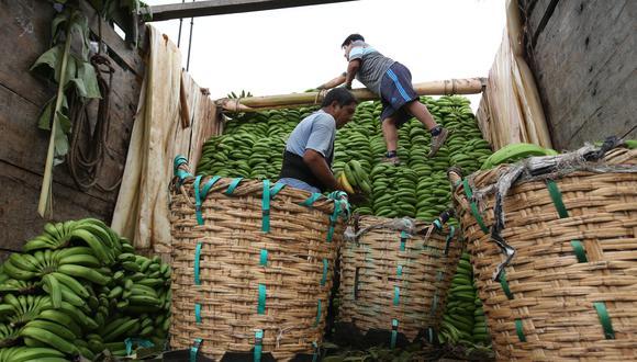 La producción de plátano se verá beneficiada, indicó el Midagri. (Foto: GEC)