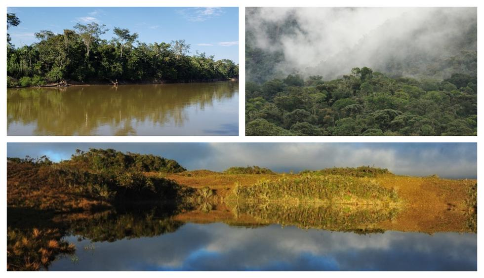 Tres nuevas áreas de conservación privada reconocidas en Madre de Dios, Cajamarca y Amazonas. (Foto: Sernamp)